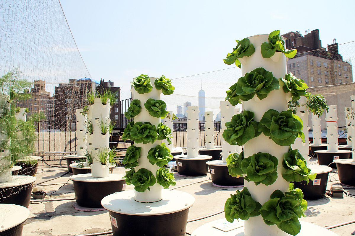 Urban Farming and its Benefits