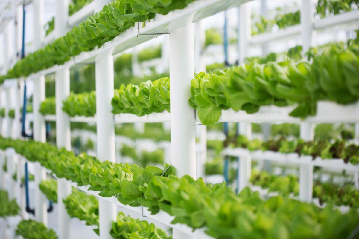 Understanding Regenerative Agriculture